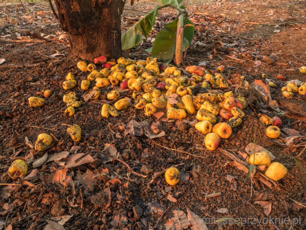 Owoce pozbawione orzecha