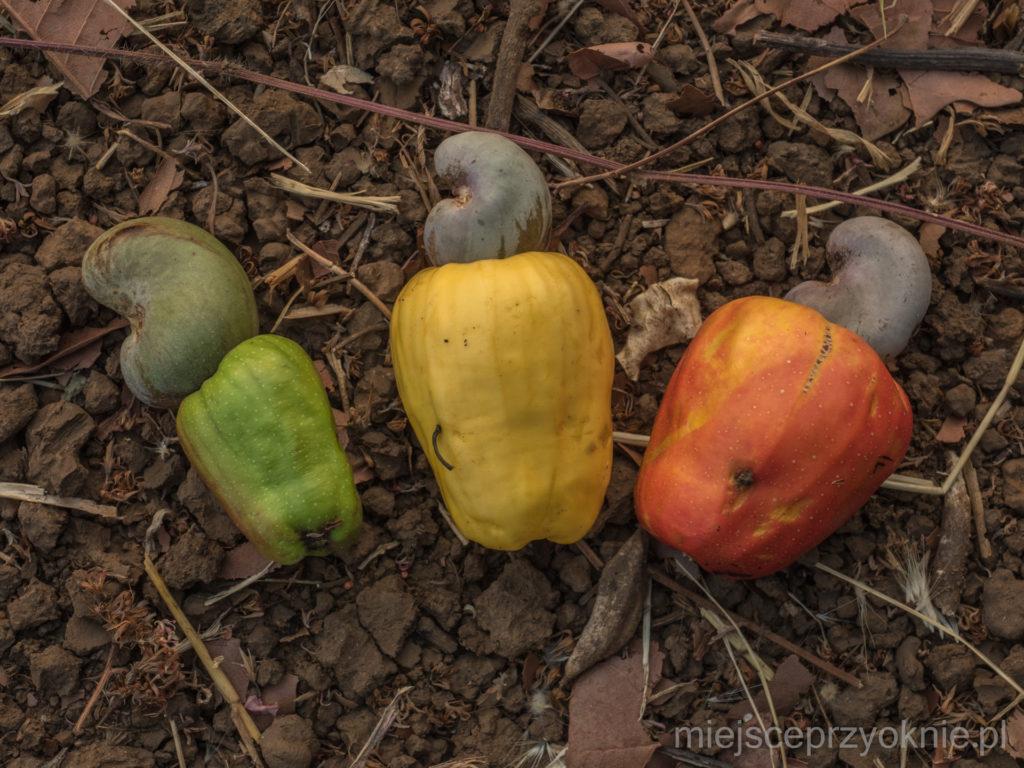 Owoce nerkowca w trzech odsłonach
