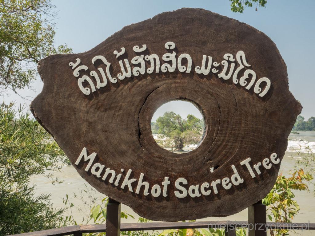 Święte drzewo rosnące w Mekongu