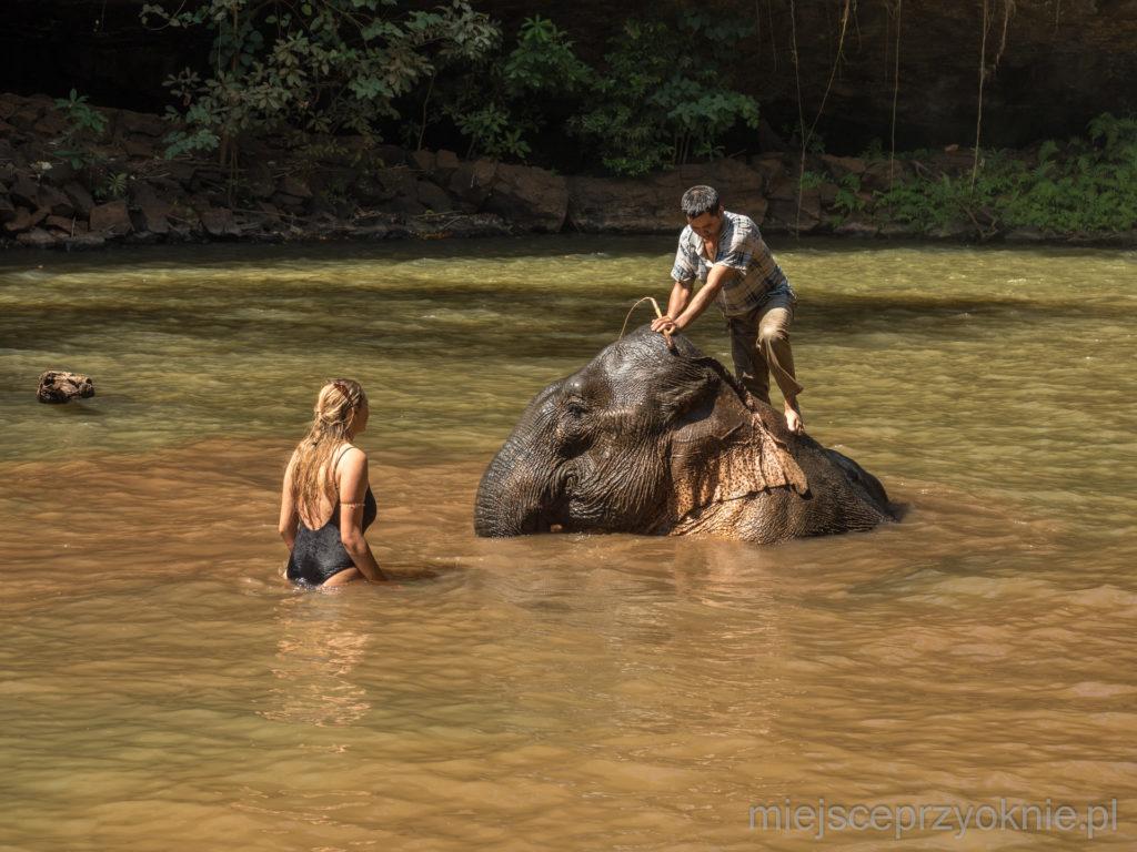 Słoń w kąpieli