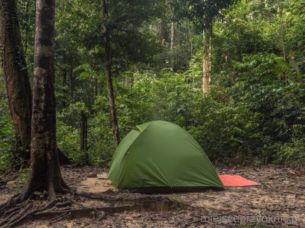 Nasz namiot w lesie