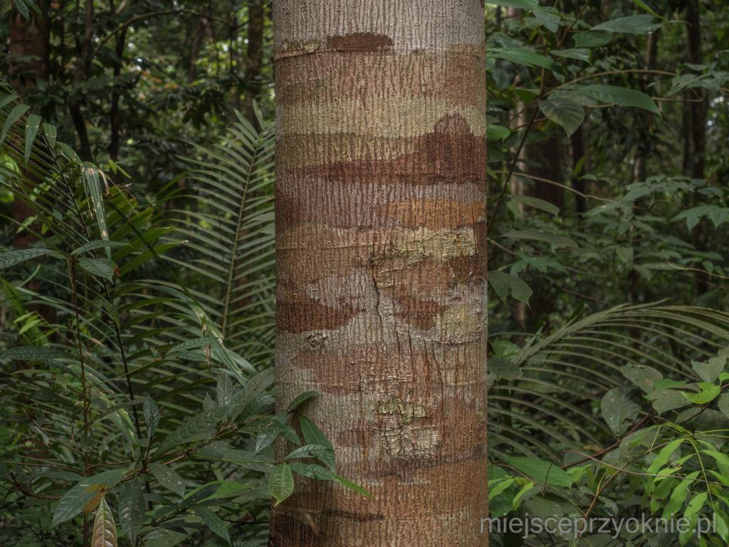 Zakamuflowane drzewo
