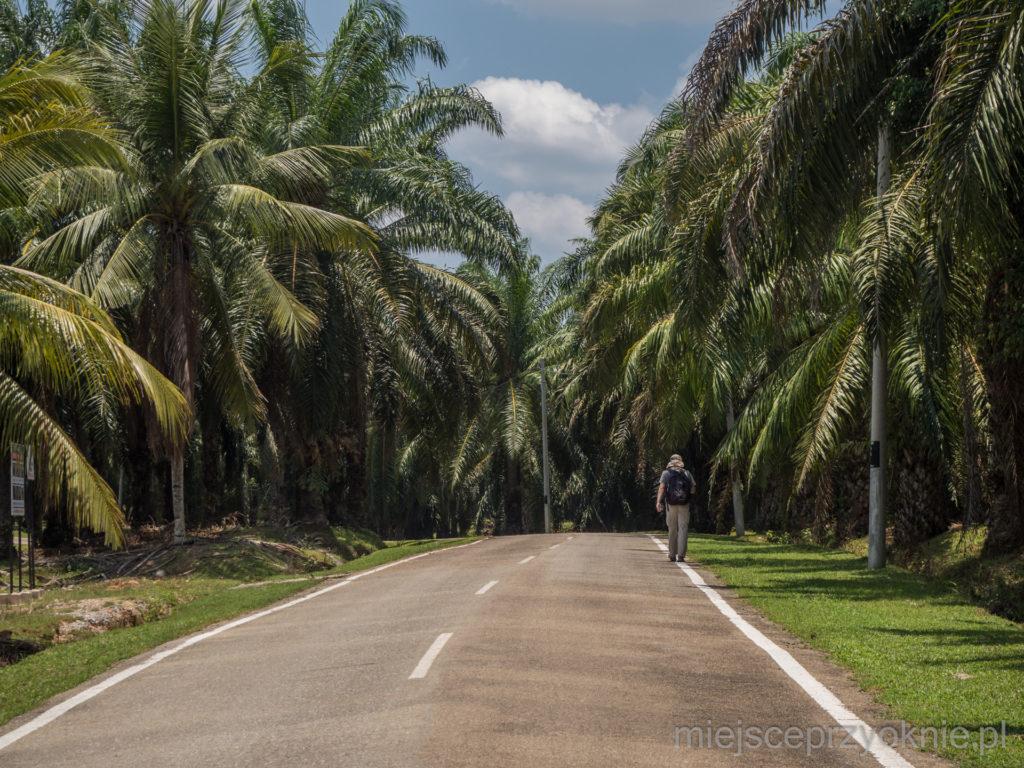 Droga do parku