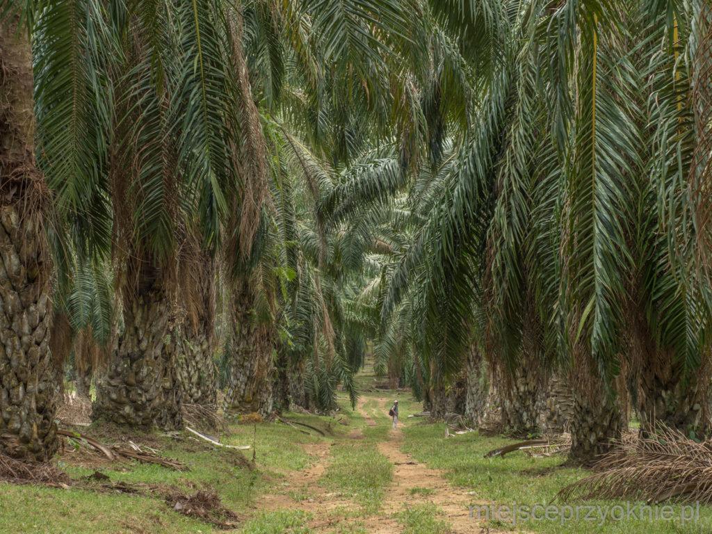 W cieniu palm