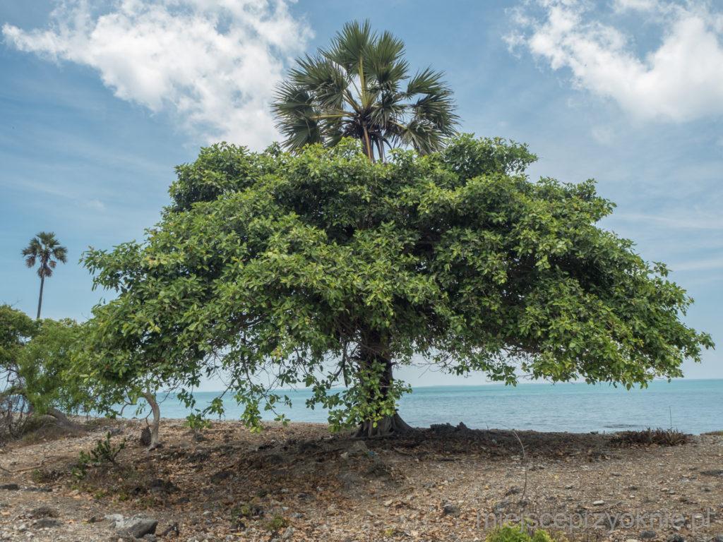 Drzewo hybrydowe